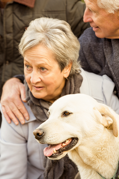 The Benefit of Dog Therapy for Alzheimer's Disease